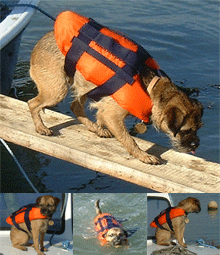 dog lifejacket image